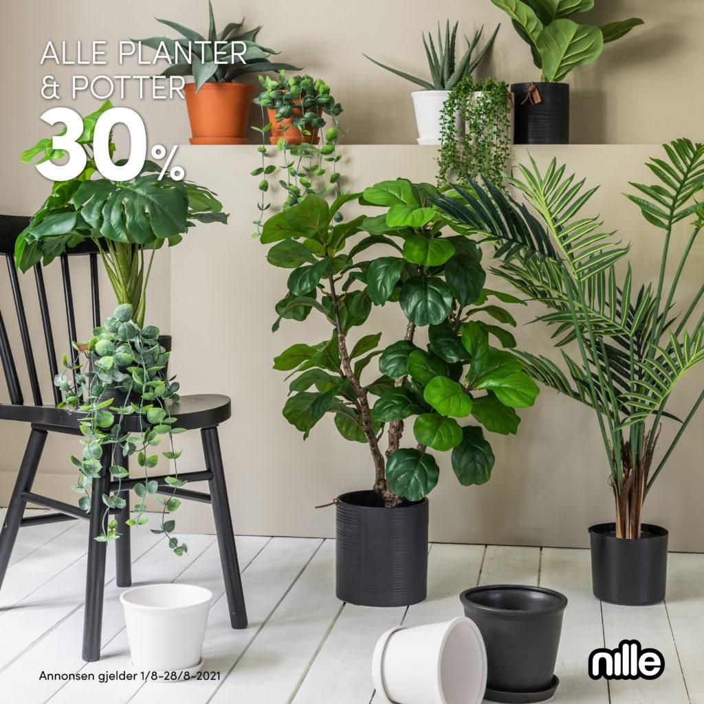 Annonser_Nille_1080x1080px_uke31-32_2 (2)